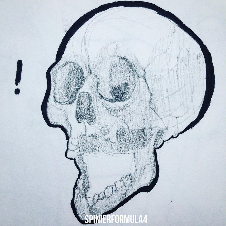 Skull Study 2 by SpinierFormula4