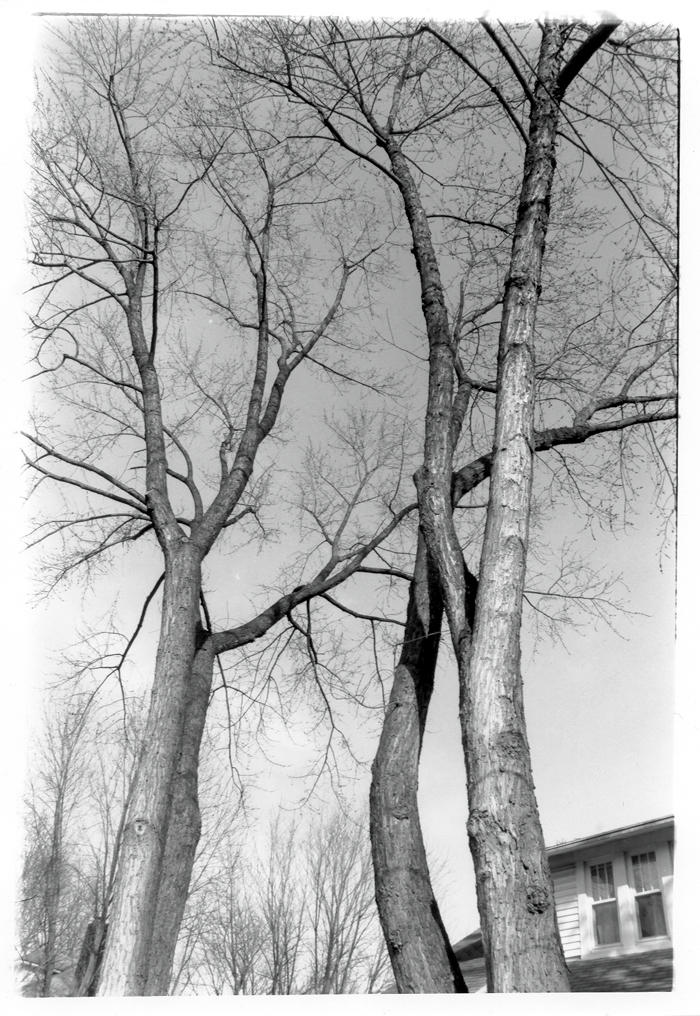 Trees by lordmarcus