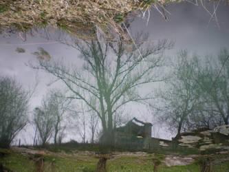 tree reflex by yurei-pressure