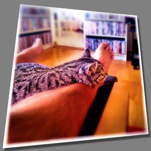 Tigger sleeping on my leg