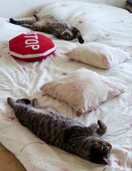 Relaxing Cat-Style