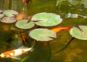 Lily pond by MedicineWolf19522