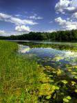 Summer lake.