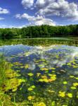 Summer lake II.