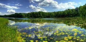 Summer lake - Panorama.