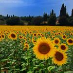 say sunny by photo-earth