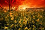 field of the sun