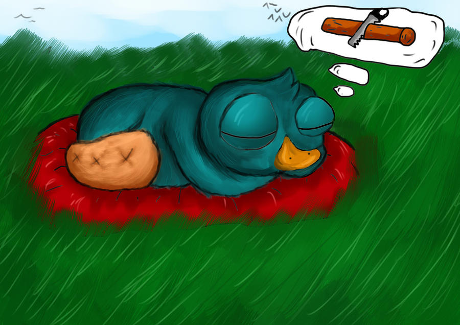 Baby platypus baby perry the platypus
