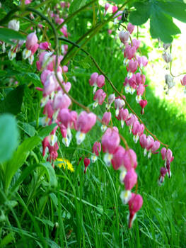 .: Bleeding Hearts :.