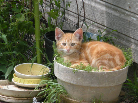 Kitten in a flower pot part 1