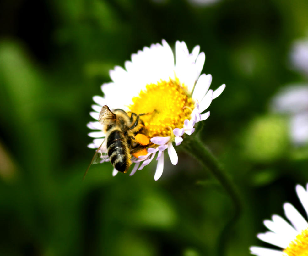 Why Bee Extinction Would Mean the End of Humanity