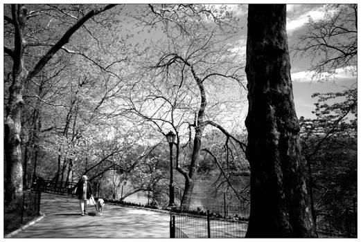 Springtime in Central Park