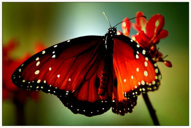 Just like a butterfly...