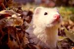 Sid's Autumn Greetings