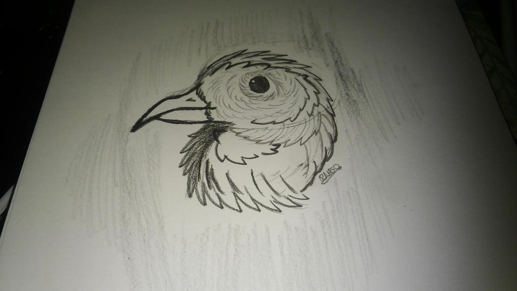 charcoal bird face by RNK50