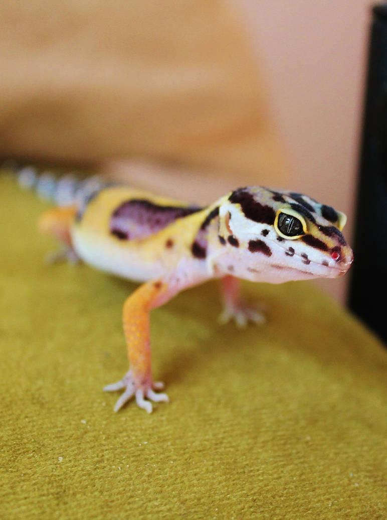 My leopard Gecko Valor by Monkeystyle3000 on DeviantArt
