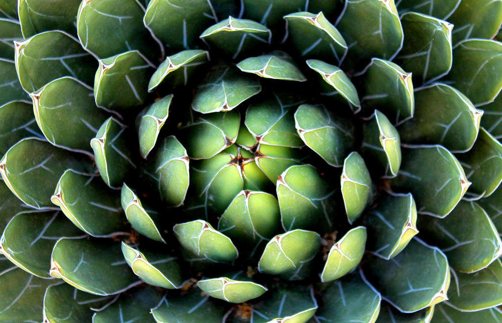 Circular Succulent by Monkeystyle3000