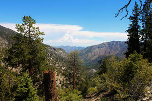 Cathedral Rock Trail View