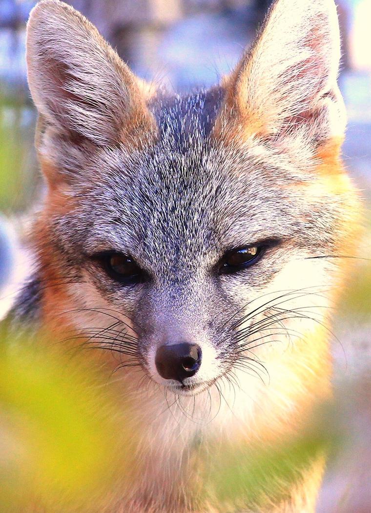 Pensive Fox by Monkeystyle3000