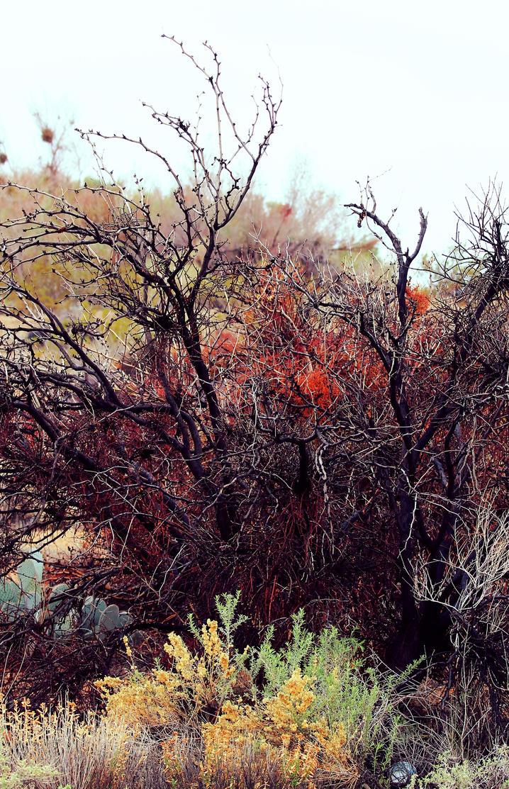 Desert Mistletoe by Monkeystyle3000