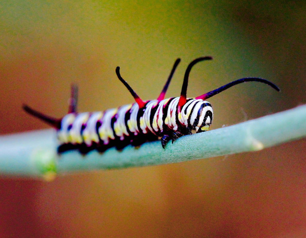 Queen Caterpillar  by Monkeystyle3000
