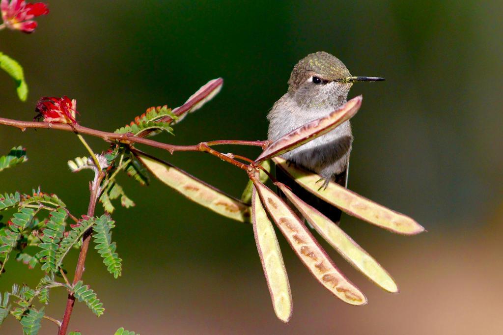Hummingbird on Break by Monkeystyle3000