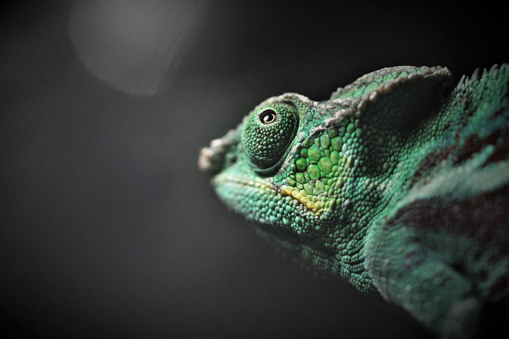 Panther Chameleon by Monkeystyle3000