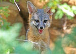Cheeky fox by Monkeystyle3000