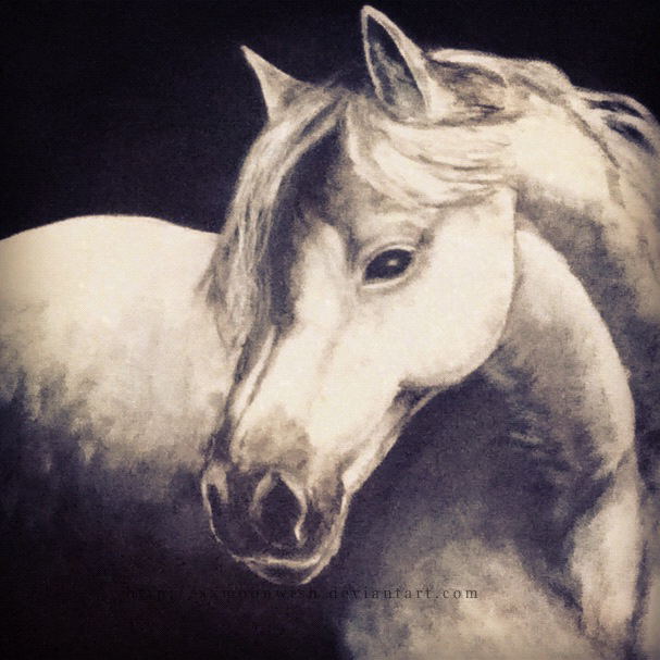 Horse Portrait by xxMoonwish
