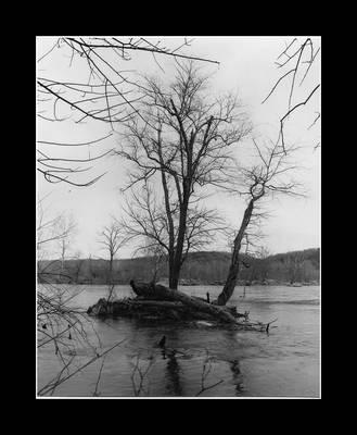 Tree at Great Falls by Betweenshades