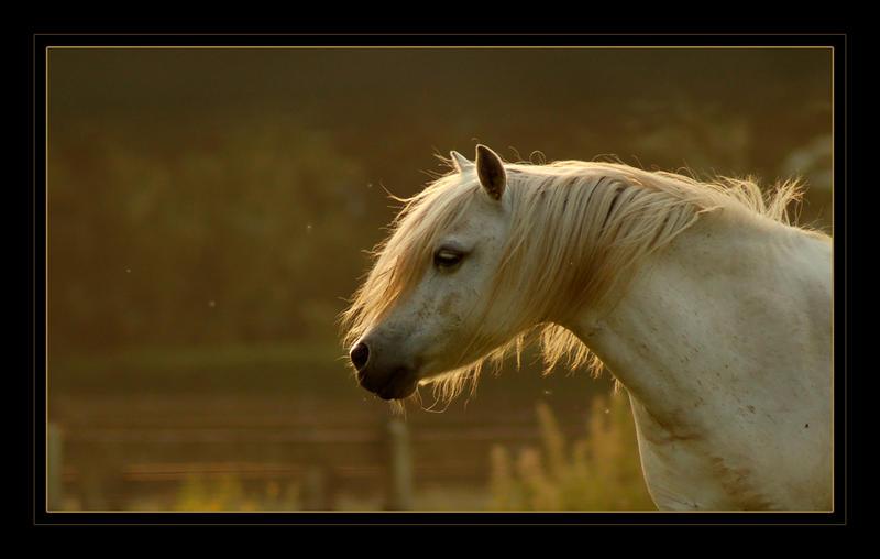 Whisperwind by PhotoLinda