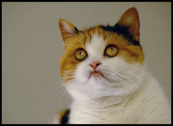 Funny cat by PhotoLinda