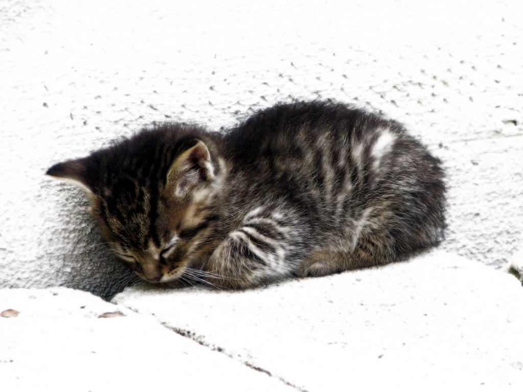 kittycat by gruppler