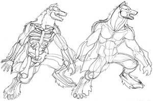 Werewolf anatomy by Pachycrocuta