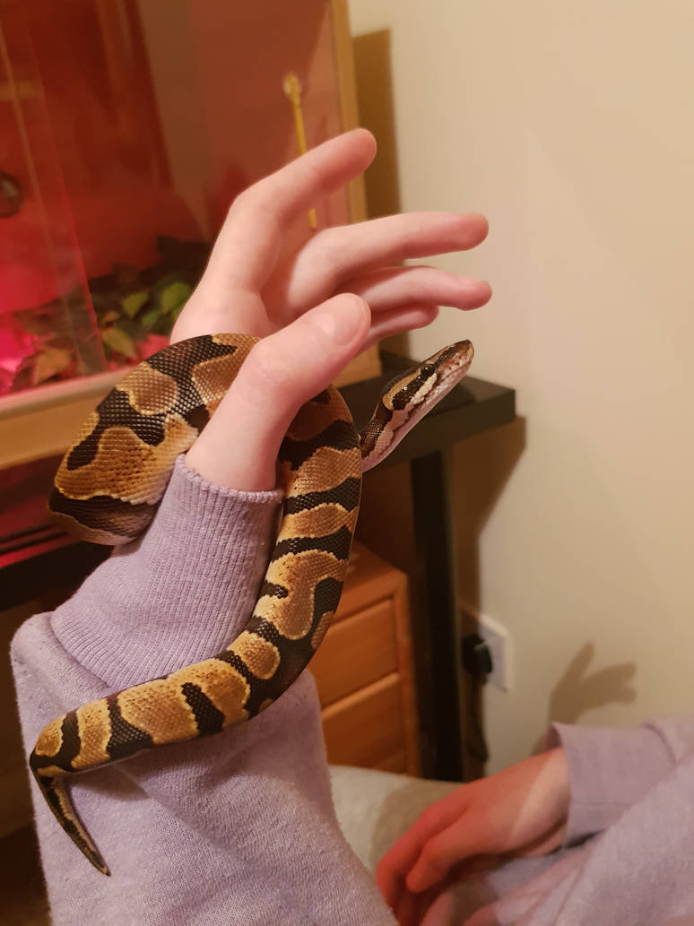 Everyone meet our new(ish) pet Noodle! by OneeTruth