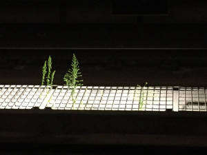 Plant life in the metro station