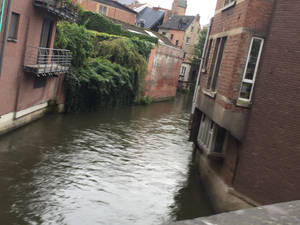 Stream in Leuven