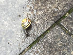 Snail in the Rain