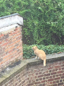 Cat at the Irish College