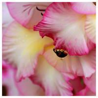 Flower Labyrinth by kamuidestiny