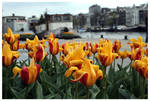 Tulips, Water, and Boats... by kamuidestiny