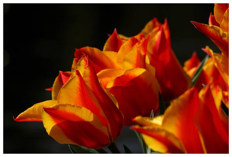 Blood Red n Orange by kamuidestiny