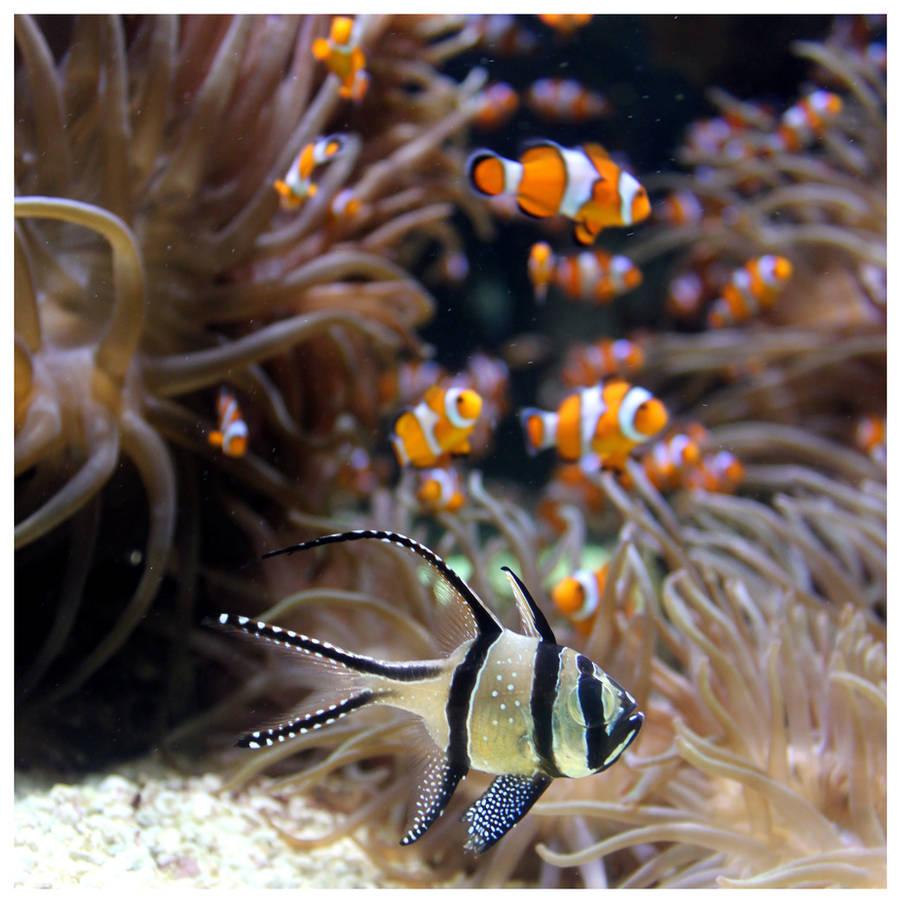 Where's Nemo? by kamuidestiny