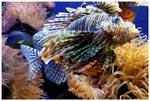 Rowr...  goes the Lion Fish by kamuidestiny