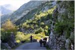 Montenegran Cows by kamuidestiny