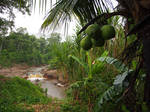 El Gato creek by kamuidestiny