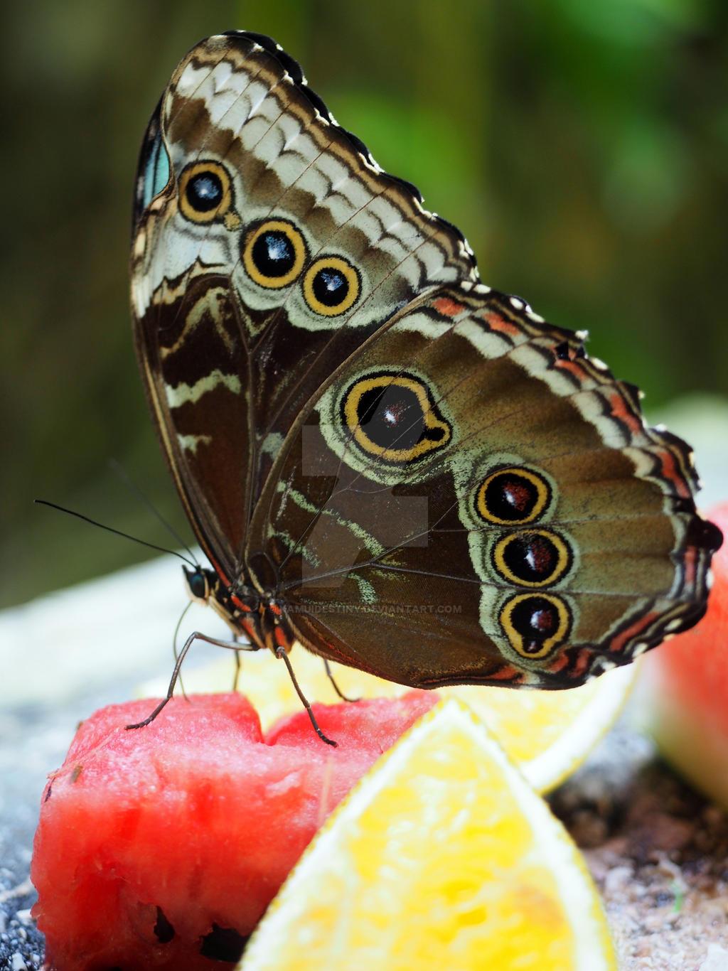 Sweet Nectar of Life
