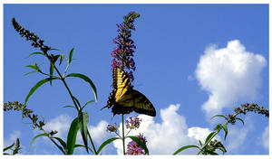 Sun Bathing Butterfly by kamuidestiny