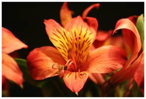 Lion lily by kamuidestiny