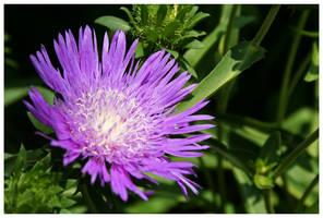 Purple Goodness by kamuidestiny